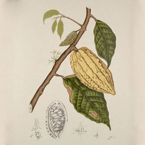 lien-ho-bot-cacao