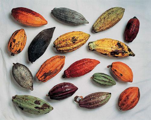 bột cacao - botcacao.com