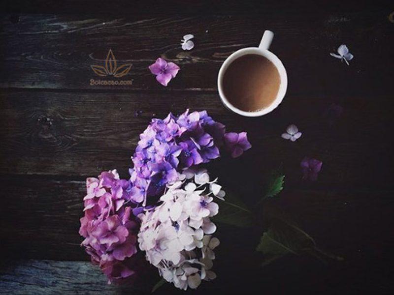 4 LÝ DO NÊN DÙNG BỘT CA CAO NGUYÊN CHẤT TRONG PHA CHẾ - CHỦ QUÁN CAFE NÊN BIẾT